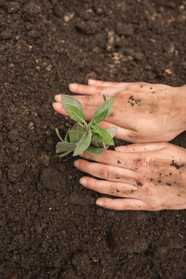 human hand planting fresh young plant into soil1 - Tienda Valton Consulting